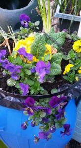 garden pic 3